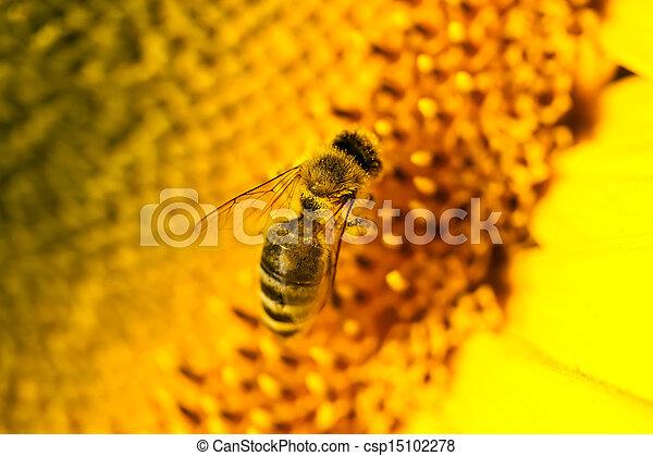 macro bee - csp15102278