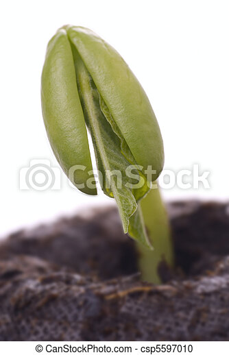 macro, boon, kiemplant - csp5597010
