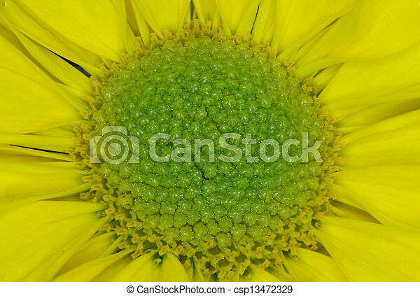 Macro flower center close up picture of a yellow flower with a macro flower center csp13472329 mightylinksfo