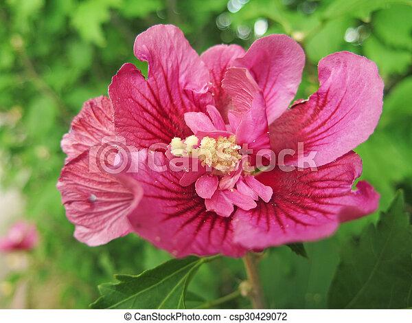 macro flower - csp30429072