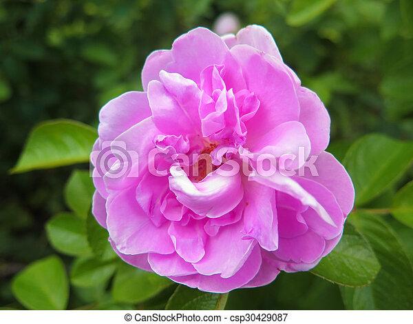 macro flower - csp30429087