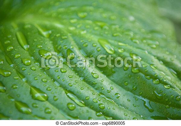 Macro toma de gotas de agua en la hoja - csp6890005