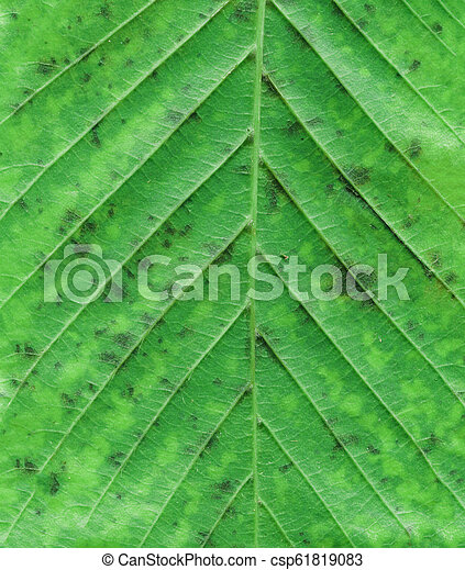 Macro of autumn green tree leaf. Natural product concept - csp61819083
