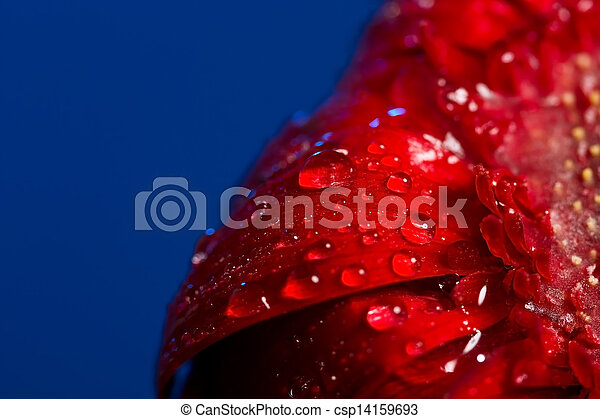 Macro of drops on red flower - csp14159693