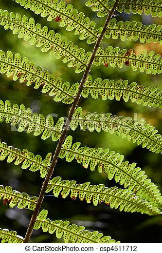 Macro of fern leaf in sunlight rays. Autumn season time. - csp4511712