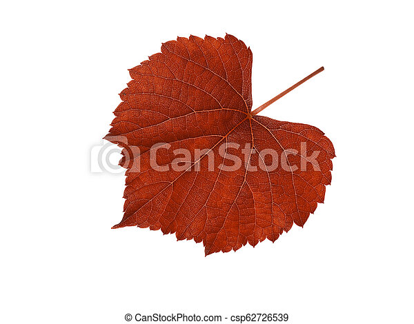 Macro of red grape leaf. - csp62726539
