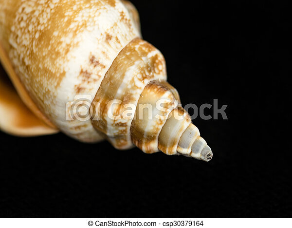 El primer plano de una concha marina - csp30379164