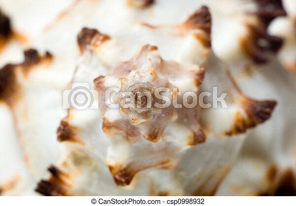 macro, shell., mar - csp0998932