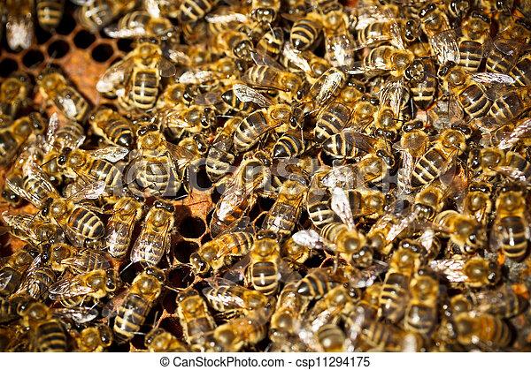 Macro shot of bees - csp11294175
