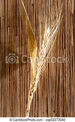 macro, trigo, orelhas - csp52273040