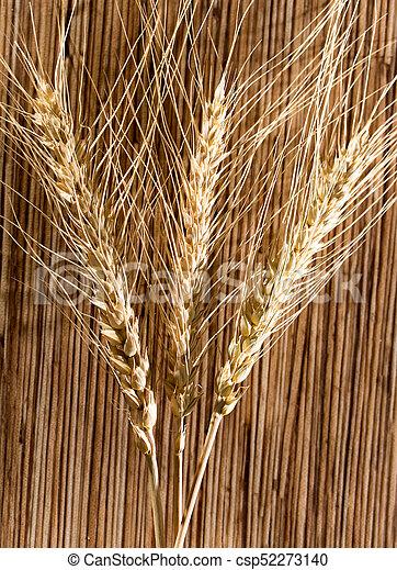 macro, trigo, orelhas - csp52273140