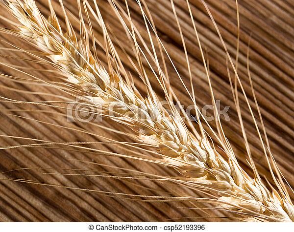 macro, trigo, orelhas - csp52193396