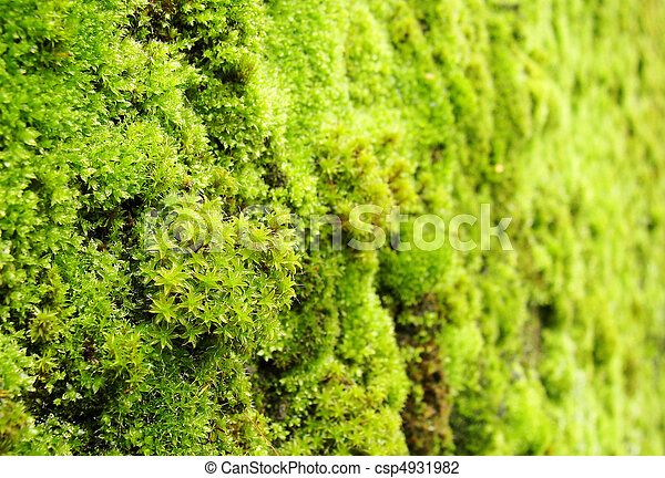 macro view of green moss on a wall - csp4931982