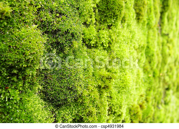 macro view of green moss on a wall - csp4931984