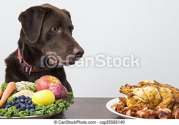 mad, kød, vegan, hund - csp25565140