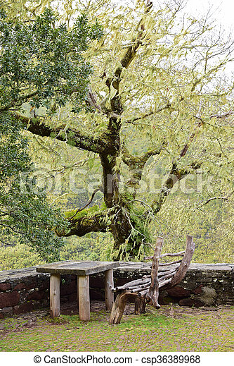 madeira, bank, rest, portugal, bereich - csp36389968