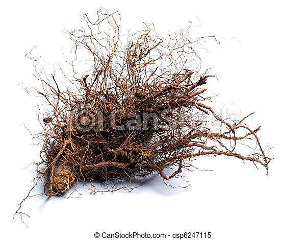 madeira, raiz - csp6247115