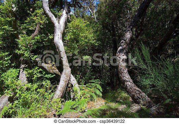 madeira - csp36439122