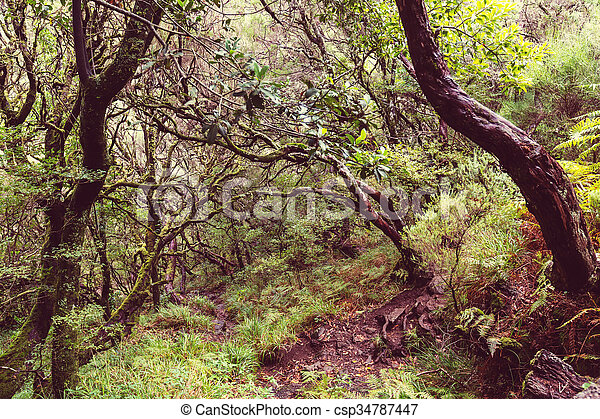 Wald in madeira - csp34787447
