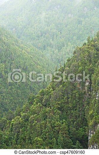 madeiras, árvores - csp47609160