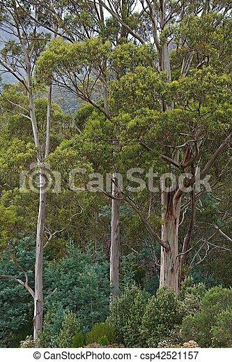 madeiras, árvores - csp42521157