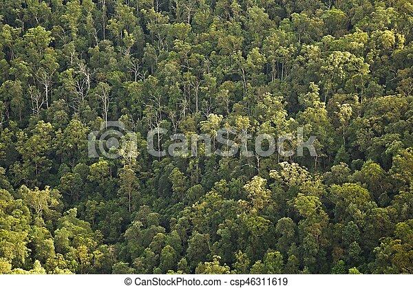 madeiras, árvores - csp46311619