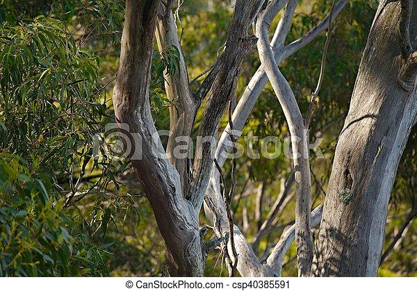madeiras, árvores - csp40385591