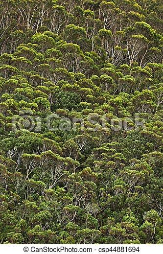 madeiras, árvores - csp44881694