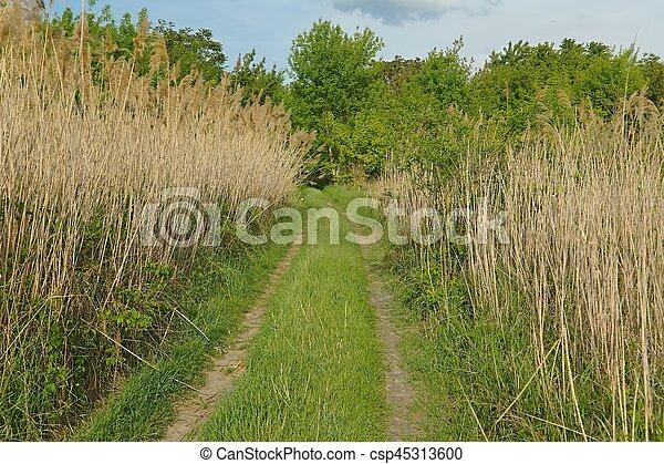 madeiras, verde, direção - csp45313600
