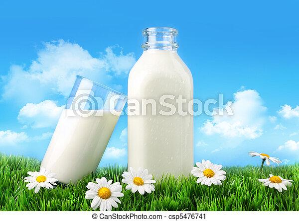 madeliefjes, melk fles, gras, glas - csp5476741