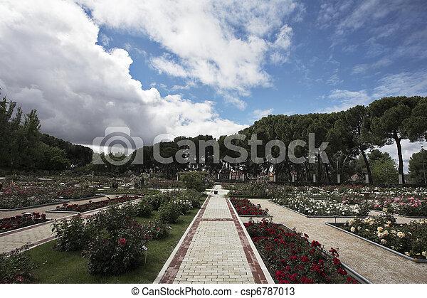 El rosario bien cuidado en primavera de Madrid - csp6787013