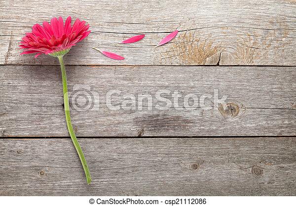 Magenta gerbera flower - csp21112086