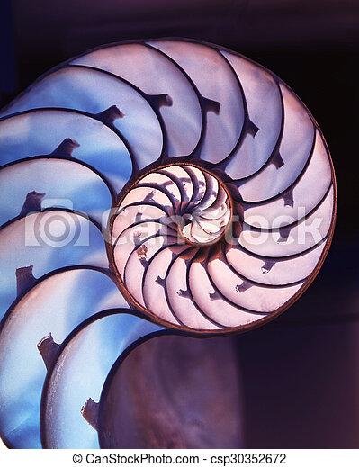 magia, concha, fundo, corte, nautilus, afastado - csp30352672