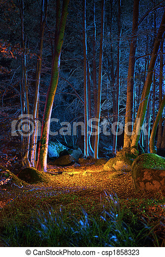 Magic night in the forest - csp1858323