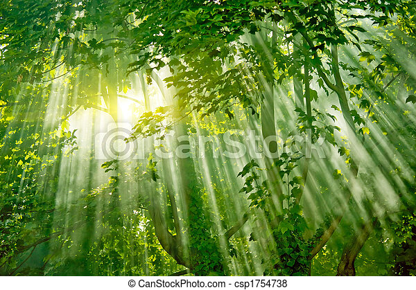 magic sunlights in forest - csp1754738