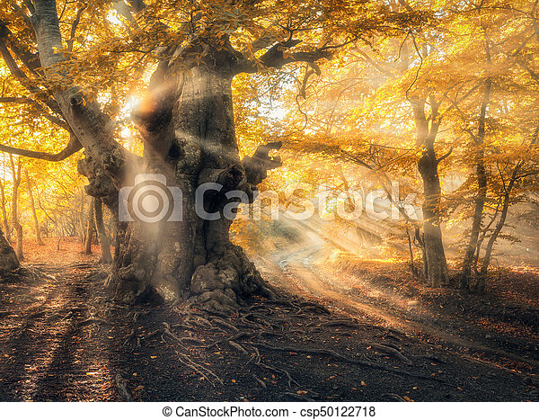 Magical autumn forest with sun rays in the evening - csp50122718