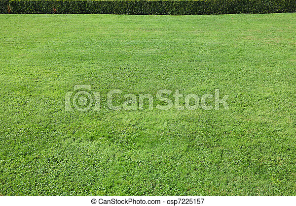 Magnificent green lawn  - csp7225157