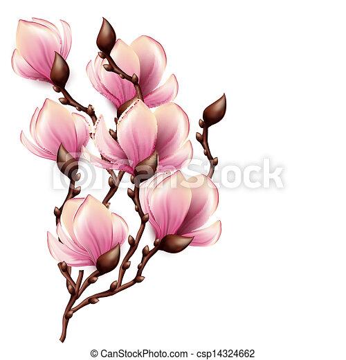 Sucursal Magnolia aislada - csp14324662
