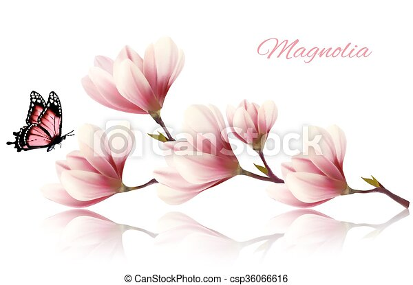 magnolia, branche, beau, butterfly. - csp36066616