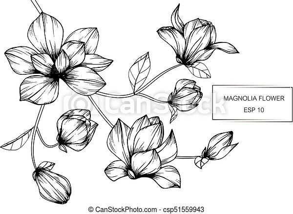 Magnolia Flower Drawing And Sketch With Black And White Line Art