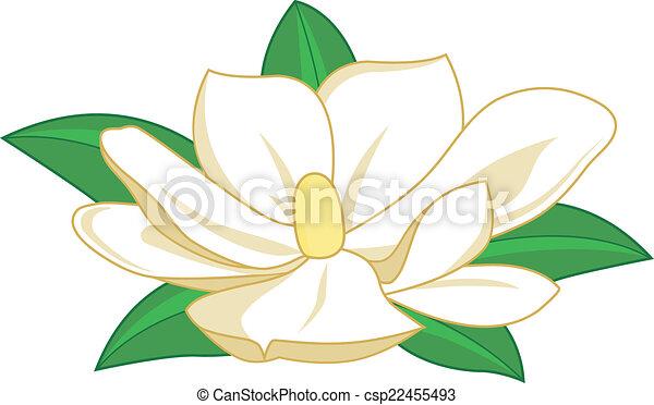 magnolia flower magnolia flower on white background isolated rh canstockphoto com magnolia wreath clipart magnolia blossom clipart