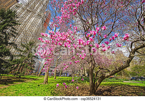 magnolia usa