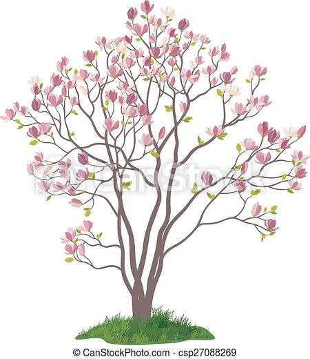 Magnolia Tree with Flowers and Grass - csp27088269