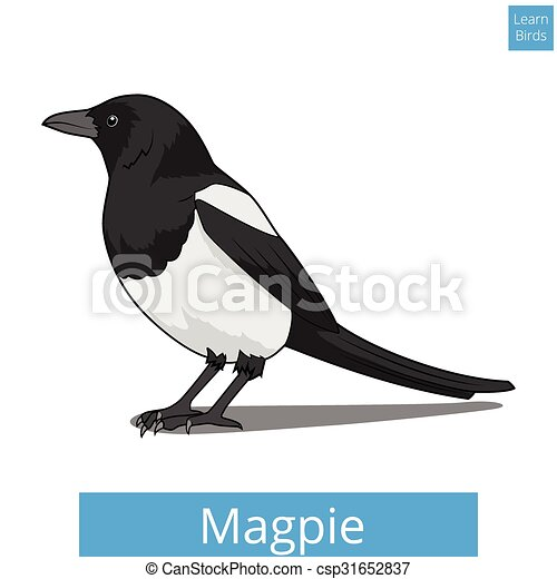 Magpie learn birds educational game vector - csp31652837