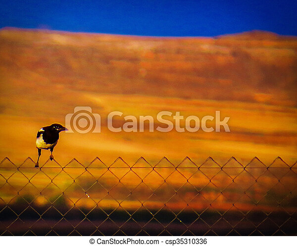 Magpie on fence - csp35310336