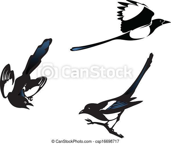 Magpies - csp16698717
