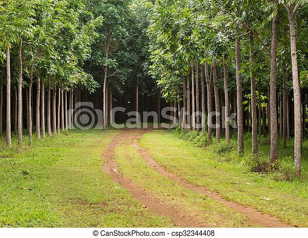 Mahogany plantation in Kauai, Hawaii - csp32344408