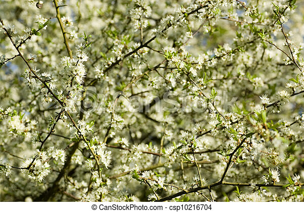 mai, fleur, arbre - csp10216704