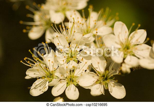 mai, fleur, arbre - csp10216695