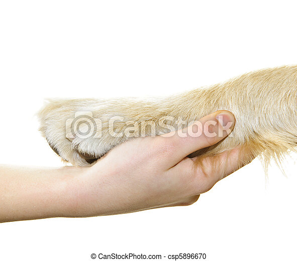 main humaine, chien, tenue, patte - csp5896670
